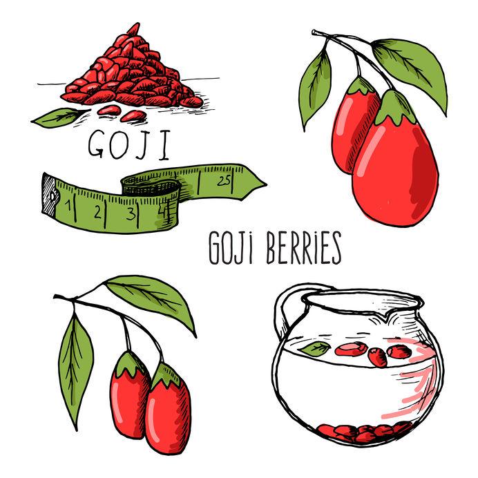 Goji bessen schets