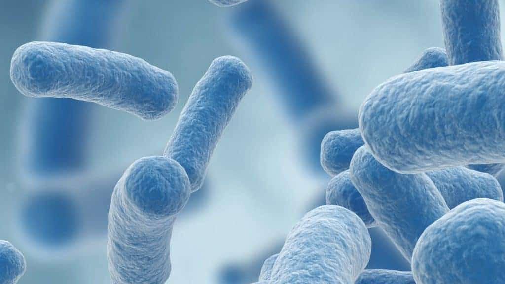 Lactobacillus gasseri: Wat is het beste product van 2020?