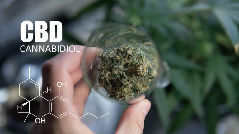 CBD olie en marihuana