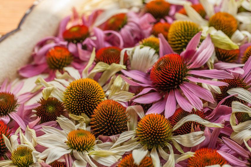 tuin met geneeskrachtige bloemen