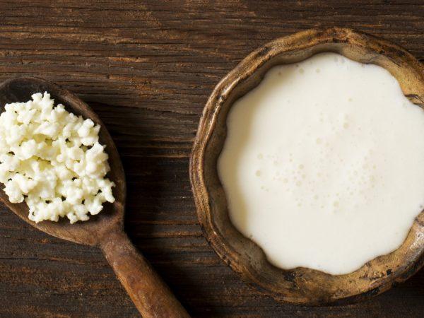 kefir en probiotica