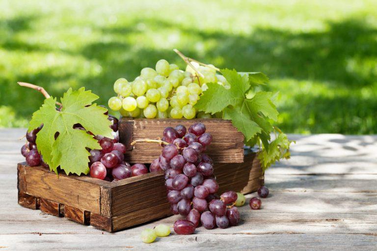 paarse en groene druiven