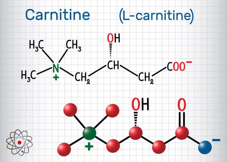 Carnitine (L-carnitine) molecule. Structural chemical formula