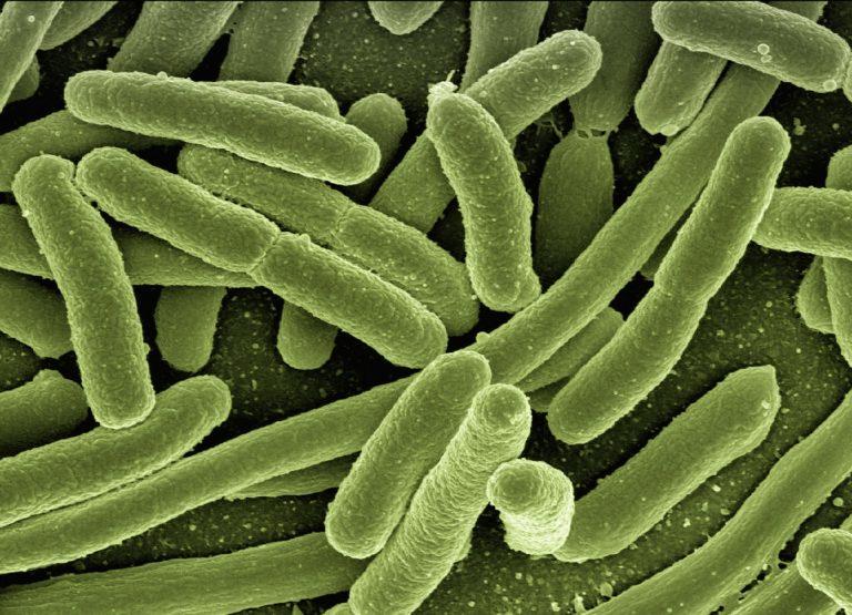 darmbatterijen onder een microscoop