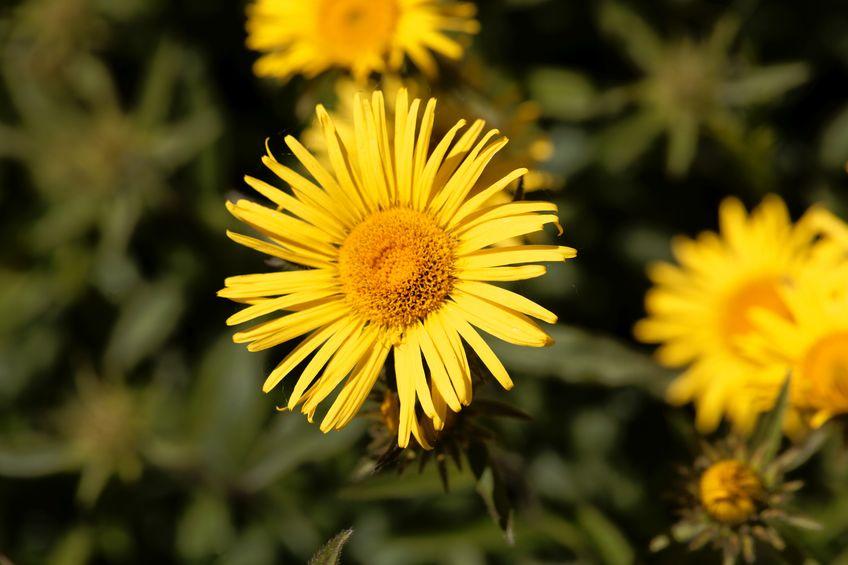 bloemen in het veld