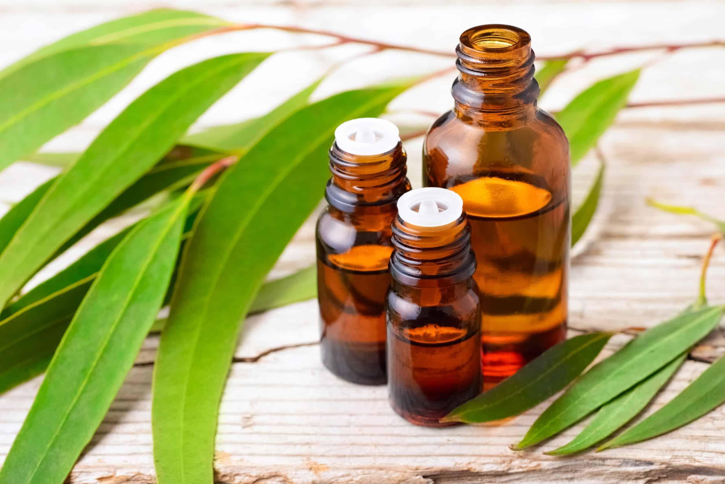 Eucalyptus olie: Wat zijn de beste producten van (09/21)?